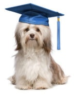 Graduation: How to include your pet in the festivities