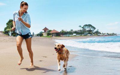 Top 5 Ways for Texas Pet Parents To Beat the Heat